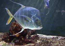 2010-05-monaco-aquaria-museum-oceanographique-transparante-vis-b5f01e72ba9749f74c6e34c0ff189aa9cbfe5dae