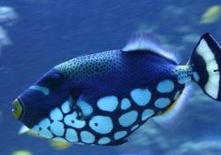 2010-05-monaco-aquaria-museum-oceanographique-vis-met-matrashuid-b79a55622a915106adefb7a5ef4b61bdfa52377f