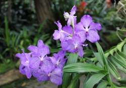 2010-10-orchideeenhoeve-luttelgeest-3-352b5796a910b456bbf9bb6a9f21b838f3c99a7c