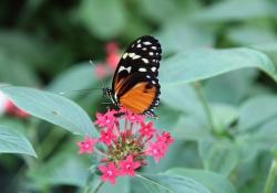 2010-10-orchideeenhoeve-luttelgeest-4-vlinder-734c63e8ae691b76a459cbf502fa47695ce88e26