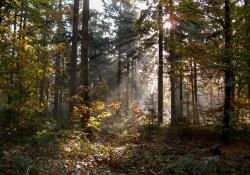 2012-10-zonnestralen-door-het-bos-45af4d71cbefc5d6950b064d2ae7ed3618fb133c