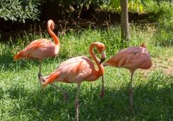 2015-07-lissabon-zoo-2-pelikanen-08de7e0a74c7a000b25561861a095ebddd7a8545