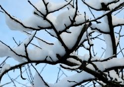 winter-8f8f0bf75fd304497c0418cceb2e45b09e8a7483