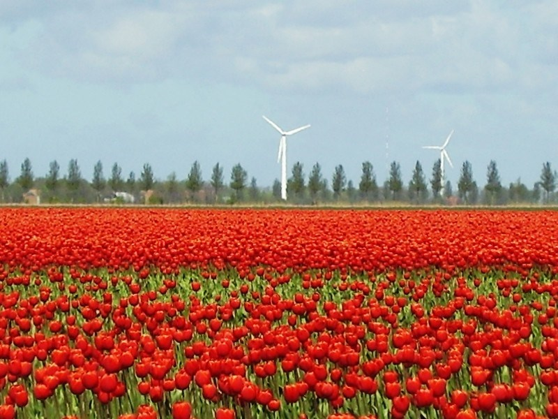 Aanmelden tulpenroute