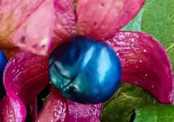 johannes-vermeers-tuinparel-0991427dc51971e62be199d1e5cef1ce419d5d7e